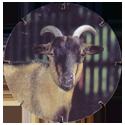Croky > Crokido's Zoo Caps 02-Dwerggeit-Chevre-Naine.