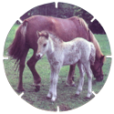 Croky > Crokido's Zoo Caps 03-Paard-Cheval.