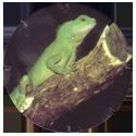 Croky > Crokido's Zoo Caps 07-Groene-Leguaan-Iguane-Vert.