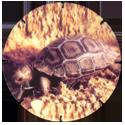 Croky > Crokido's Zoo Caps 09-Galapagos-Schildpad-Tortue-Galapagos.