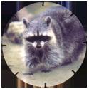 Croky > Crokido's Zoo Caps 10-Wasbeer-Raton-Laveur.