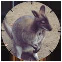 Croky > Crokido's Zoo Caps 11-Kangoeroe-Kangourou.