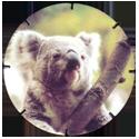 Croky > Crokido's Zoo Caps 14-Koala-Koala.