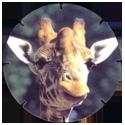 Croky > Crokido's Zoo Caps 16-Giraffe-Giraffe.
