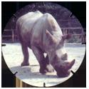 Croky > Crokido's Zoo Caps 18-Neushoorn-Rhinocéros.