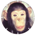 Croky > Crokido's Zoo Caps 19-Bleekgezichtchimpansee-Chimpanzé-À-Face-Pâle.