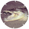Croky > Crokido's Zoo Caps 20-Nijlkrokodil-Crocodile-Du-Nil.