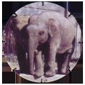 Croky > Crokido's Zoo Caps 21-Indische-Olifant-Eléphant-Indien.