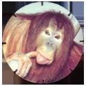 Croky > Crokido's Zoo Caps 22-Orang-oetan-Orang-outan.
