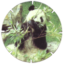 Croky > Crokido's Zoo Caps 23-Reuze-Panda-Panda-Géant.