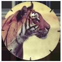 Croky > Crokido's Zoo Caps 24-Bengaalse-Tijger-Tigre-de-Bengale.