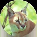 Derform > Dzikie Zwierzęta 01-cat.