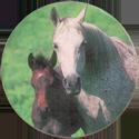 Derform > Konie 01-Konie.