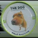 Evercrisp > The Dog 04-Pitbull-Americano.
