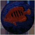 Krome Kaps > 3 Fish 3C.