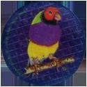 Krome Kaps > 4 Birds 4C.