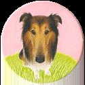 Magic Box Int. > Head First Mad Caps 001-Collie-dog.