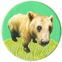 Magic Box Int. > Head First Mad Caps 079-Brown-Bear.