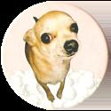 Magic Box Int. > Head First Mad Caps 131-Chihuahua.