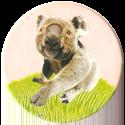 Magic Box Int. > Head First Mad Caps 169-Koala.
