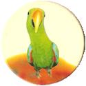 Magic Box Int. > Head First Mad Caps 236-Parrot-(yellow-bg).