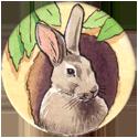 Backwoods Buddies Rabbit-4-points.