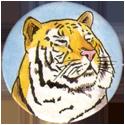 Backwoods Buddies Tiger-3-points.