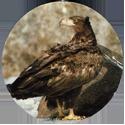 Cadbury Birds of Prey Flip-em's 02-White-Tailed-Eagle.