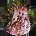 Cadbury Birds of Prey Flip-em's 05-European-Eagle-Owl.