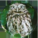 Cadbury Birds of Prey Flip-em's 07-Little-Owl.