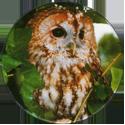 Cadbury Birds of Prey Flip-em's 08-Tawny-Owl.