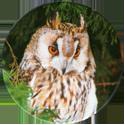 Cadbury Birds of Prey Flip-em's 09-Long-Eared-Owl.