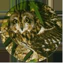 Cadbury Birds of Prey Flip-em's 10-Short-Eared-Owl.