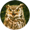 Cadbury Birds of Prey Flip-em's 11-Great-Horned-Owl.