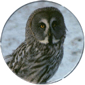 Cadbury Birds of Prey Flip-em's 12-Great-Grey-Owl.