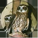 Cadbury Birds of Prey Flip-em's 13-Boobook-Hawk-Owl.
