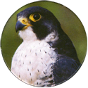 Cadbury Birds of Prey Flip-em's 14-Peregrine.
