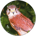 Cadbury Birds of Prey Flip-em's 15-Kestrel.