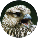 Cadbury Birds of Prey Flip-em's 16-Saker-Falcon.