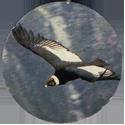 Cadbury Birds of Prey Flip-em's 19-Andean-Condor.