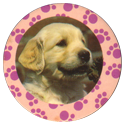 Collector Caps 081-Lovely-Puppies.