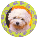 Collector Caps 084-Lovely-Puppies.