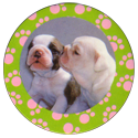 Collector Caps 089-Lovely-Puppies.