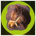 Collector Caps 091-Horses.