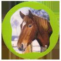 Collector Caps 093-Horses.