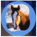 Collector Caps 096-Horses.
