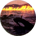 Free Willy 2 Orcas-and-burning-oil-spill.