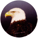 Kool Kaps 02-Bald-Eagle.