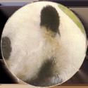 Milkcap Maker Panda.
