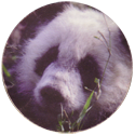 National School Meals Week World Safari 98 04-The-Panda.